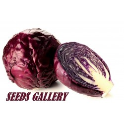 Red Cabbage Seeds