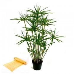 Graines de Papyrus (Cyperus papyrus L.)