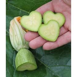 Moule aux fruits et légumes, forme d'étoile, changement de forme de fruits