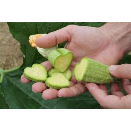 Molde de Frutas e Vegetais, Forma de Estrela, Forma de Frutas de Mudança