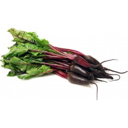 "Beetroot Seeds ""Cylindra"""