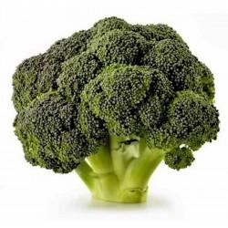 Brokoli Seme 'Corvette'