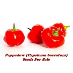 Peppadew chilifro (Capsicum baccatum)