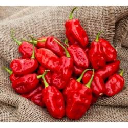 Habanero Zavory Chili Seme – Blago Ljut