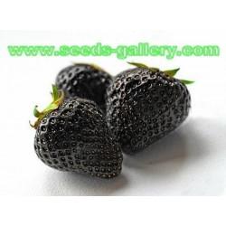 Schwarze Erdbeere Samen - Exotische Früchte