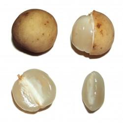 Langsat - Lanzones Seeds (Lansium parasiticum)