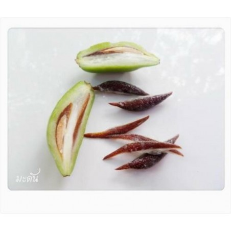 Garcinia schomburgkiana - Madan - Seeds - very rarre