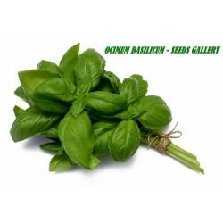 Basil Seeds - Sweet Basil