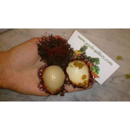 Rambutan Fresh Seeds Exotic Fruits