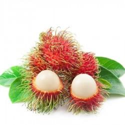 Semillas Rambután (Nephelium lappaceum) Frutas Exóticas