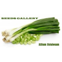 Aljma - Zimski Luk Seme (Allium Fistulosum)
