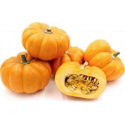 Mini Musk Pumpkin Seeds