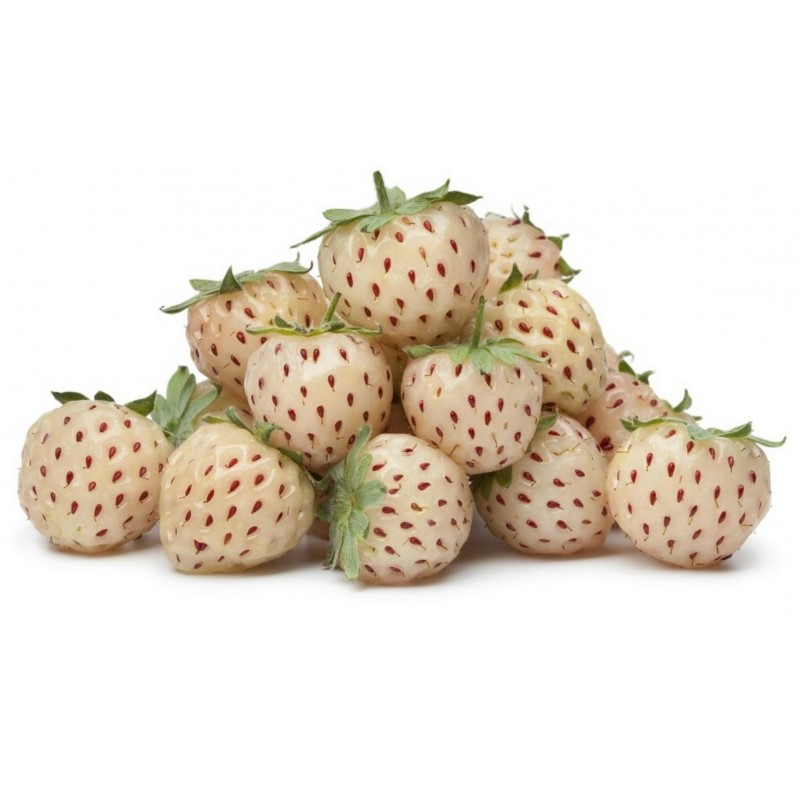 Weiße Erdbeere Samen 'White Soul'