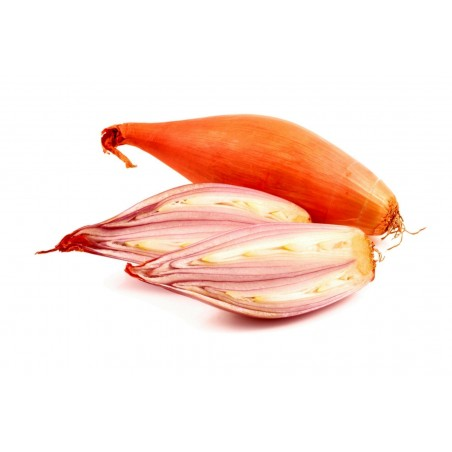 Chalota Bulbos / sementes