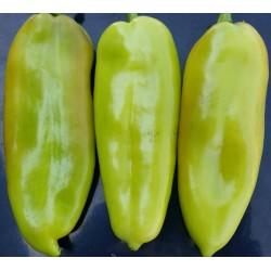 Semi di peperone dolce DUKAT
