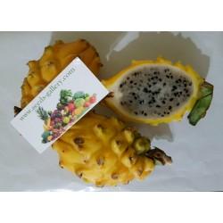 Semillas de Dragon Amarillo Frutas Rare Exoticas