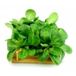 Corn Salad Lettuce Seeds