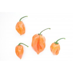 Graines Piment Habanero Peach 2 - 1