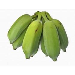Wild Banana Seeds (Musa balbisiana) 2.25 - 10