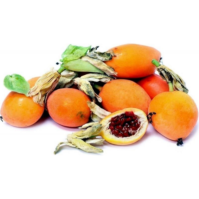 Hristov Venac Seme - Passiflora caerulea