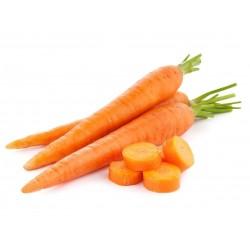 20g - 14.000 Seeds Danvers Carrot Seeds 8.5 - 3