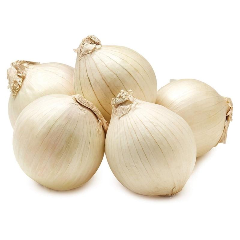 Oignon Blanc A Planter graines oignon blanc paris silverskin. 200 ou 4000 graines