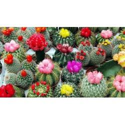 Graines De Cactus Mix 15 espèces différentes 2.25 - 1