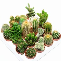 Graines De Cactus Mix 15 espèces différentes 2.25 - 2