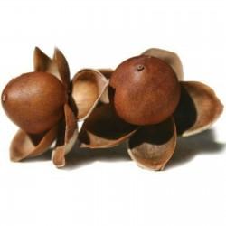 Graines de Liane d'argent (Argyreia nervosa) 1.95 - 1