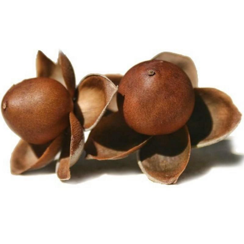 Semi di Hawaiian Baby Woodrose (Argyreia nervosa) 1.95 - 1