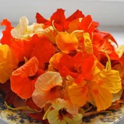 Καπουτσίνο αναμικτοι Σπόροι - φαγώσιμο, θεραπευτικό 2 - 1