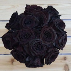 Extra Schwarze Rosen Samen Top ! 2.5 - 3
