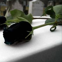 Frön Black Rose Sällsynta 2.5 - 1