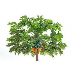 Semillas de Papayero - Carica Papaya