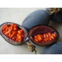 Frö av Passionsblomma (Passiflora morifolia) 1.7 - 13