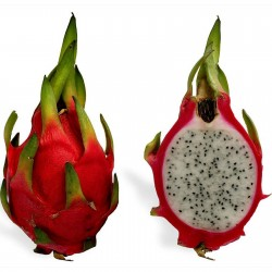 Dragon Fruit Rare Exotic...