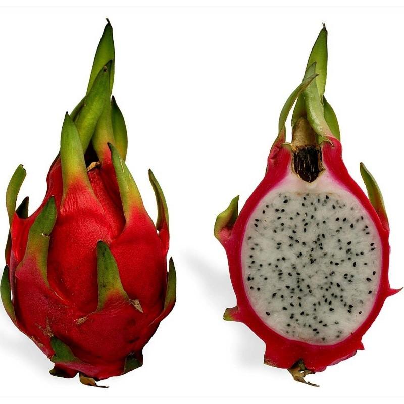 Drachenfrucht Pitahaya Samen 2.35 - 6