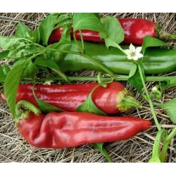 Σπόροι πιπεριά Numex Big Jim 1.75 - 3