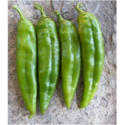 Chili Samen Numex Big Jim 1.75 - 4