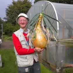 Οι Kelsae Giant Σπόροι Κρεμμύδι 2 - 5