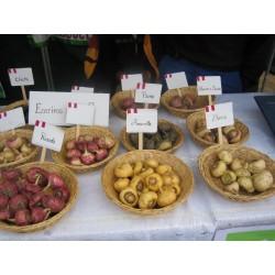 Maca Seeds (Lepidium meyenii) 2.2 - 6