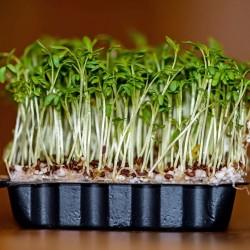 Gartenkresse Samen (Lepidium sativum) 1.45 - 1