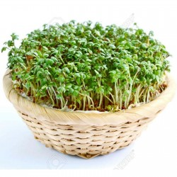 Garden Cress Lettuce Seeds 1.45 - 2