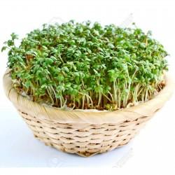 Semi di Crescione Comune 1.45 - 2