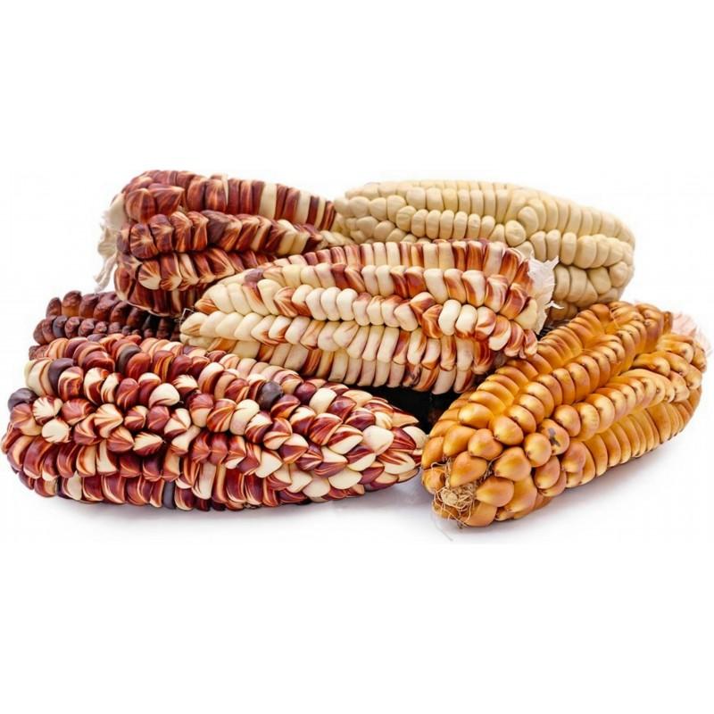 Peruvian Giant Red Sacsa Kuski Corn Seeds 3.499999 - 11