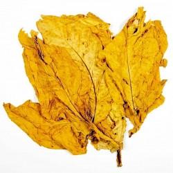 Hav. Gold Tobacco Smooth 1000 Tabaksamen
