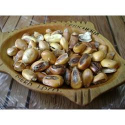 Giant Peruvian Chullpi Corn - Maiz Seeds 2.45 - 4