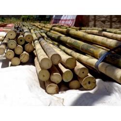 Gvozdeni Bambus Seme 4 - 2