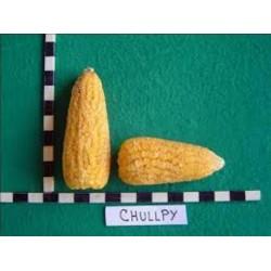 Graines de Maïs des Andes Chulpe - Cancha Jaune 2.25 - 2