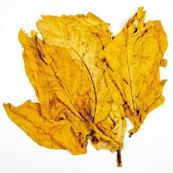 Tobaksfrön Hav. Gold Smooth